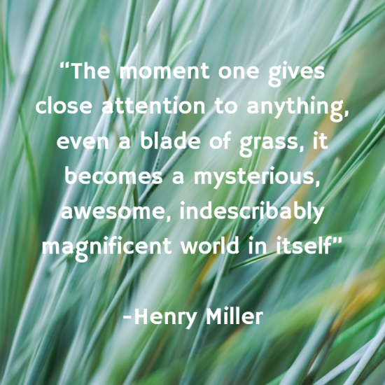 """""""The moment one gives close attention to anything, even a blade of grass, it becomes a mysterious, awesome, indescribably magnificent world in itself"""""""