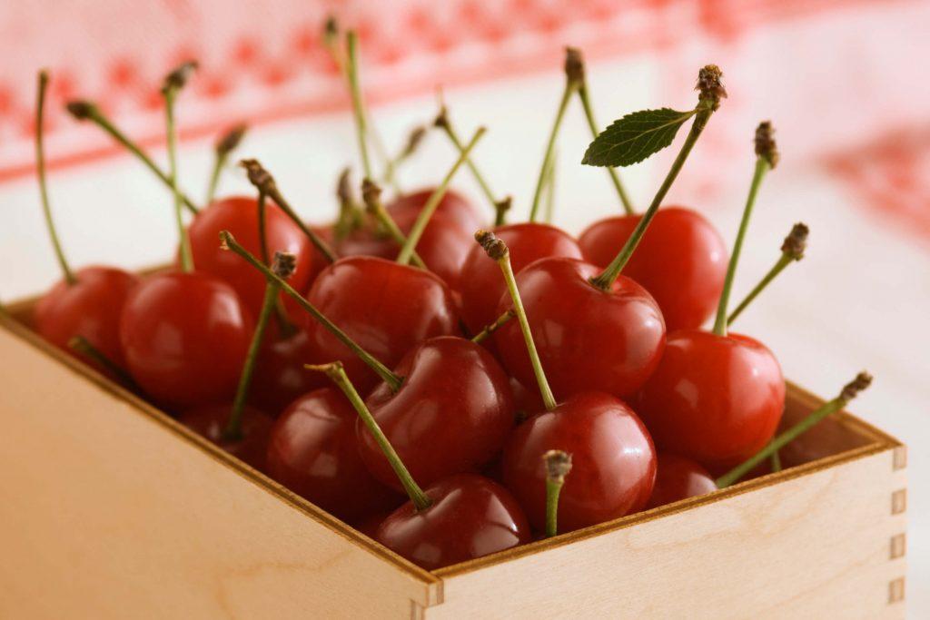 tart cherries michigan